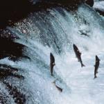 Salmon Finance: A Fishy Business