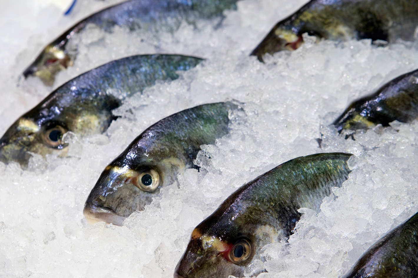 Frozen fish trade finance an icy market for Frozen fish food